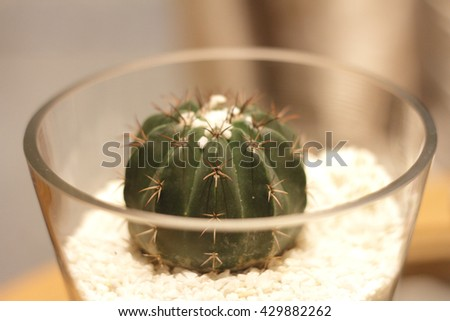 Free photos Miniature cactus succulent plant in a gl vase with ... on flower tissue box cover, flower painting, flower sign, flower dinnerware set, flower decoration, flower gift, flower store, flower punch set, flower coloring pages, flower arrangements, flower basket, flower decor, flower trash can, flower crystal, flower bouquet, flower stand, flower container, flower pot, flower window, flower plant,