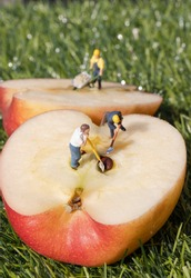 Miniature construction workers working on an apple