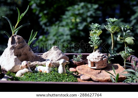Miniature Mediterranean garden in a pot with a stony hut shelter kazun, typical for Istria, rocky landscape and grazing sheep