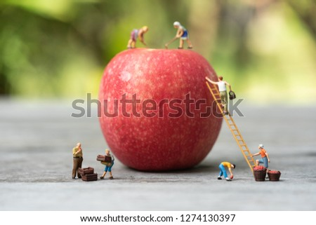 Miniature people, farmer climbing on the ladder for collecting red apples from big apple.