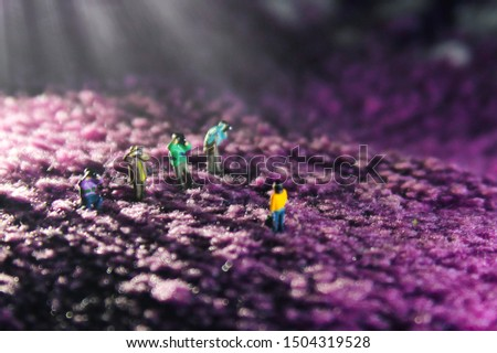 miniature people, group of photographer taking picture in lavender field concept