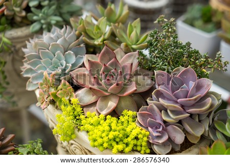 Miniature succulent plants #286576340