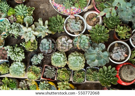 Miniature succulent plants in a planter - stock photo