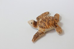Miniature turtle with light color on white background.