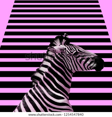 Minimal Contemporary collage art.  Zebra and zebra background.