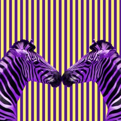 Minimal Contemporary collage art. Zebra friendship concept