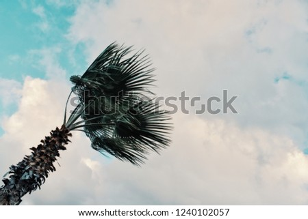 minimal graphic concept picture of palm tree in strong winds in front of storm clouds