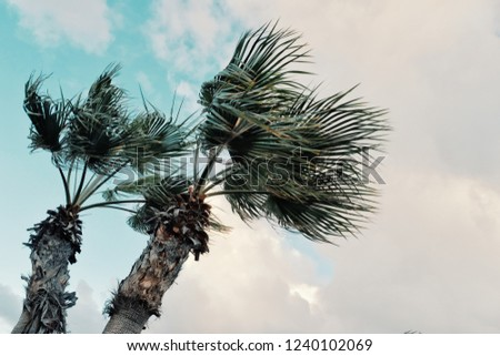 minimal graphic concept picture of palm trees in strong winds in front of storm clouds