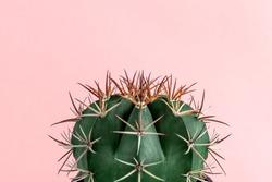 Minimal green cactus houseplant on pastel pink background