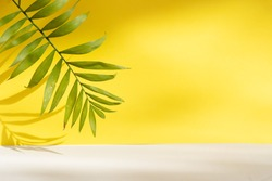 Minimal modern product display on textured gray and yellow background with fresh palm leaves and shadows