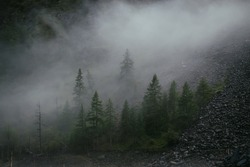 Minimal mountain scenery with low clouds among coniferous trees on steep slope. Minimalist alpine landscape of mountainside with tops of firs in low clouds. Silhouettes of trees in fog on mountain.