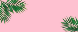 Minimal tropical green palm leaf on  pink paper background.  Flat lay Top view with copy space for  your text.