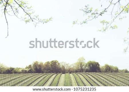 minimal vineyard panorama