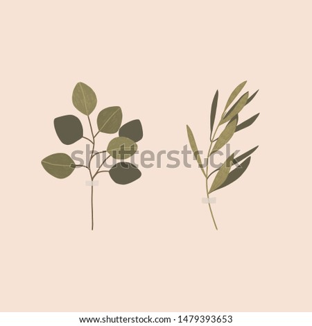 Minimalism art. Set of two branches with leaves. Eucalyptus branch. Olive branch.