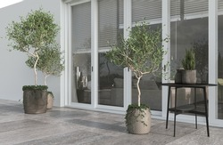 Minimalism modern architecture design sunlight and white color with large window. Plants olive trees, table and pots. 3d rendering. 3d illustration.
