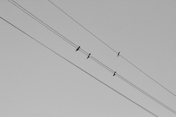 Minimalist black and white shot of four small swallows birds sitting on high voltage lines against sky