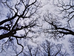 Minimalist black and white shot of silhouettes of tree branches contrasting with grey sky. Photo taken from unusual angle in park in Krakow Poland. Concept of scary, spooky, eerie, mysterious nature.