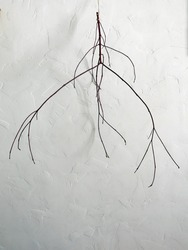 minimalist composition of thin branches against a white wall