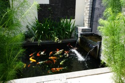 minimalist koi fish pond, rectangular shaped pond with a small waterfall, suitable for the backyard of the house