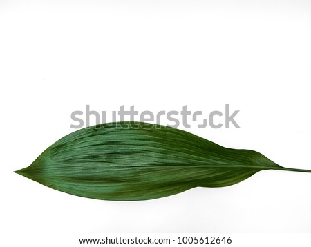 Minimalist plant background Big bright green leaf is lying on a white background Flat lay Modern minimalistic mockup with empty space #1005612646