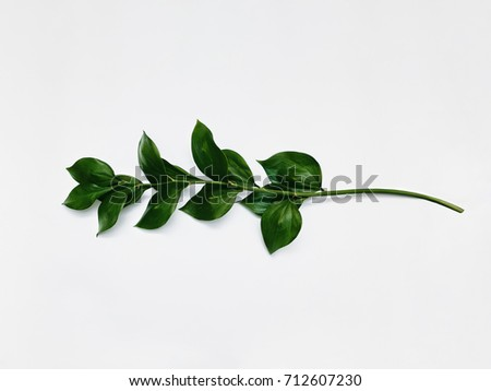 Minimalist plant background Bright green branch is lying on a white background Flat lay Modern minimalistic mockup with empty space #712607230