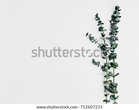 Minimalist plant background Bright green branch is lying on a white background Flat lay Modern minimalistic mockup with empty space #712607233