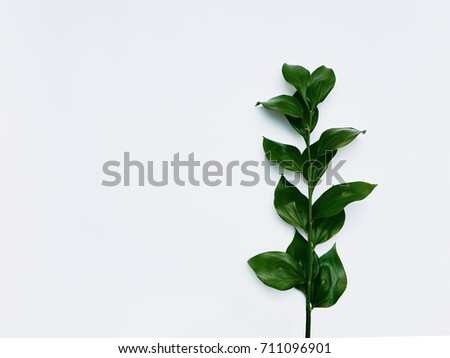 Minimalist plant background Bright green leaves are lying on a white background Flat lay Modern minimalistic mockup with empty space #711096901