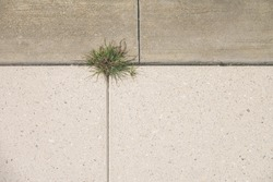 Minimalist top-down view of a clump of green grass growing like a weed between large blocks of concrete and conglomerate pavement