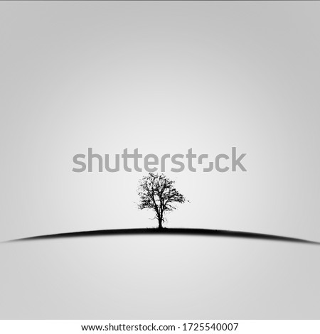 Minimalista fénykép egy magányos fa a hóban. Fekete és fehér Stock fotó ©