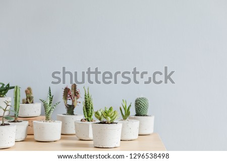 Minimalistic home interior with composition of cacti and succulents on the wooden table in hipster cement pots. Grey walls. Stylish and floral concept of home garden. Copy space. #1296538498