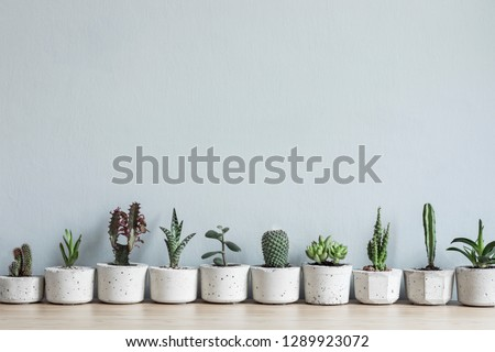Minimalistic home interior with composition of cacti and succulents on the wooden table in stylish cement pots. Grey walls. Stylish concept of home garden. Copy space.