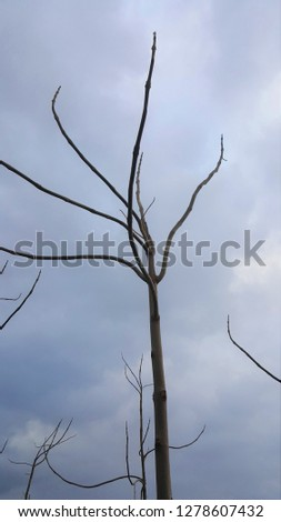 minimalistic picture of an eerie and weird tree across a very grey sky on a chilly and misty winter day. several branches are visible in interesting directions.