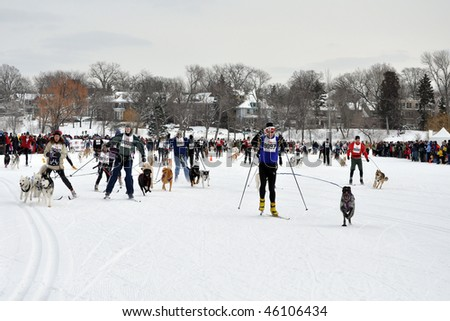 MINNEAPOLIS - FEBRUARY 6:  Cross Country Skiers taking part in the world's largest Skijor Loppet, part of the Cities of the Lakes Loppet, in Minneapolis, on Feb. 6, 2010.