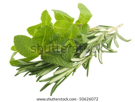 Mint and rosemary branches on white background
