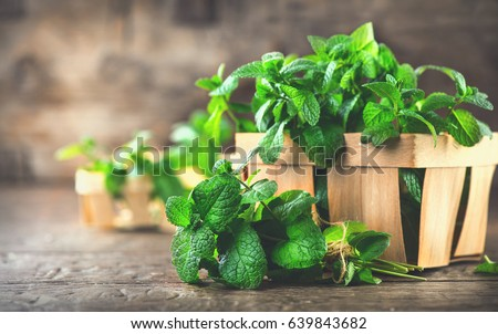 Mint. Bunch of Fresh green organic mint leaf on wooden table closeup. Selective focus. Peppermint in small basket on natural wooden background #639843682