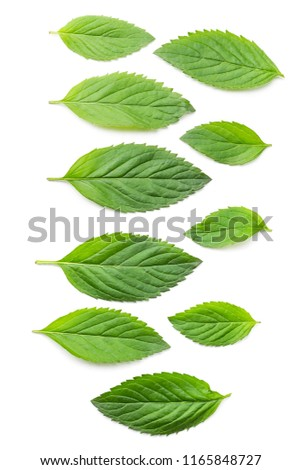 mint different leaves #1165848727