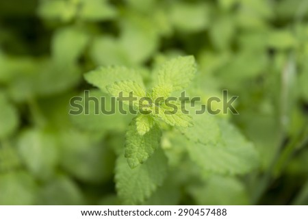 Mint green background pouring a nice background