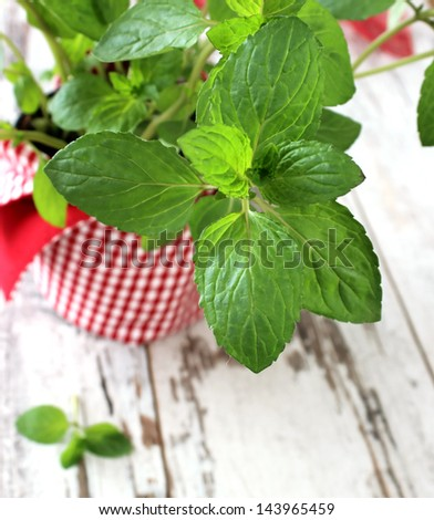 Mint herb growing in a pot on wooden boards