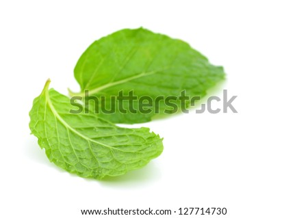 Mint leaf - stock photo