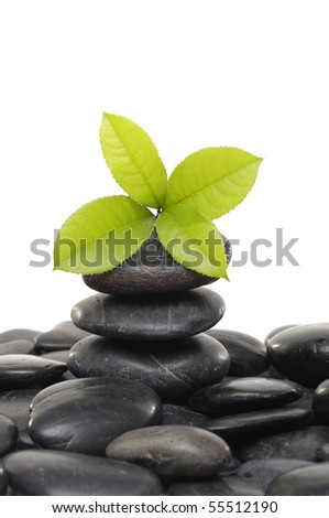 mint leaf and Stack of stones