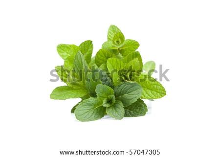 Mint leaf close-up - isolated on White Background