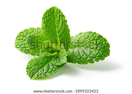 Mint leaf. Fresh mint on white background. Mint leaves isolated. Full depth of field.