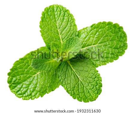 Mint leaf. Fresh mint on white background. Mint leaves isolated. Full depth of field. Foto stock ©