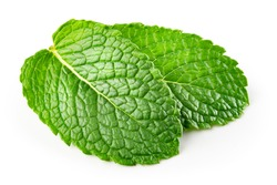 Mint leaf. Fresh mint on white background. Mint leaves isolated. With clipping path.