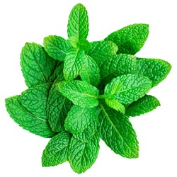 Mint leaf isolated on white background. Heap of Spearmint leaves, peppermint, close up