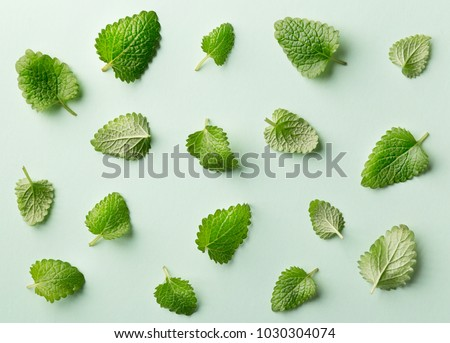 Mint leaf pattern on pastel background. Variation of peppermint leaves viewed from above. Top view #1030304074