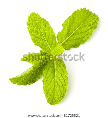 mint leafs isolated on a white background
