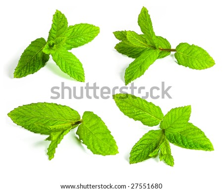 mint leafs isolated on white