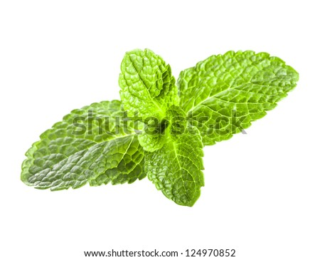 Mint leaves closeup isolated on white