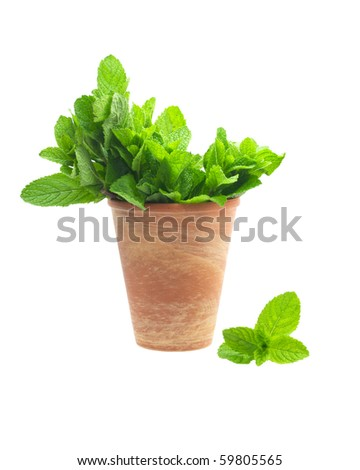 mint leaves in a clay pot